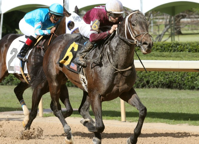 counterforce_oaklawn_coady